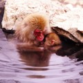 Photos: 母ザルと赤ちゃんザル・・