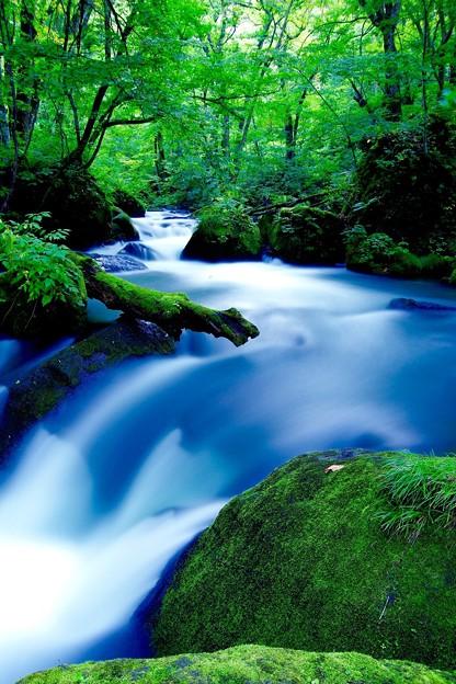 奥入瀬渓流の有名な流れ。。阿修羅の流れ 9月12日