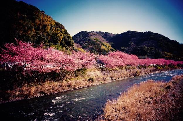 Photos: 河津町の風景。。河津川と山々。。20160221