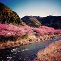 河津町の風景。。河津川と山々。。20160221