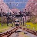 桜を電車を眺める人々。。山北駅 20160402