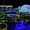 写真: 昭和記念公園イルミネーション 宇宙の風景を思わせる 20171223