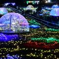 写真: 昭和記念公園イルミネーション 宇宙の風景を思わせる(3) 20171223