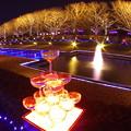 写真: 昭和記念公園イルミネーション 魚眼で撮ってみた風景 20171223