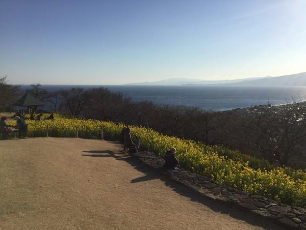 撮って出し。。相模湾の眺めいい菜の花と風景 2月4日