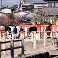 撮って出し。。曽我梅林での流鏑馬の馬たち 2月11日