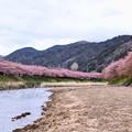 撮って出し。。朝の河津桜を。。3月6日