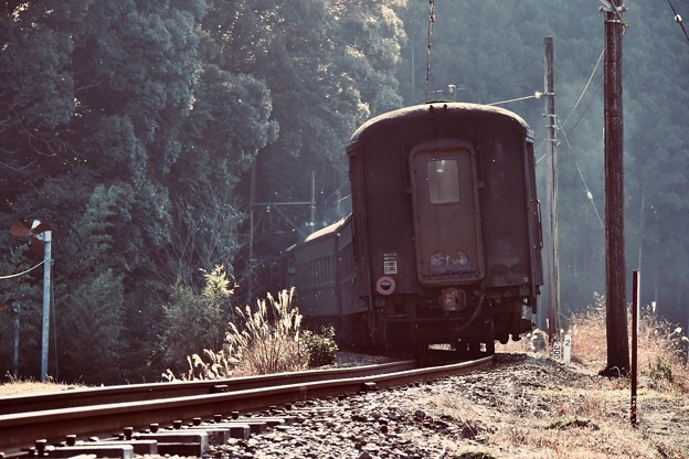写真: 客車を見送って。。大井川鐵道 抜里 20180120