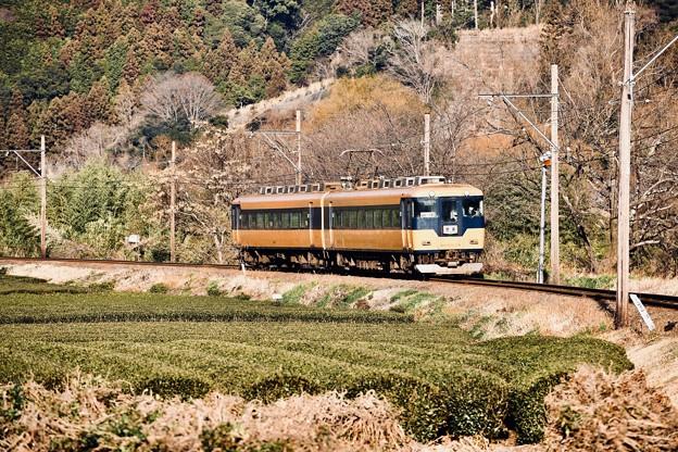 写真: 茶畑快走する元近鉄特急16000系  大井川鐵道 抜里 20180120