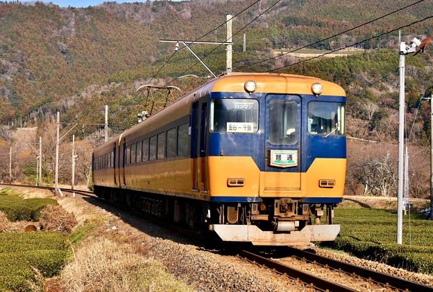 写真: 大井川鐵道 抜里を駆け抜けて茶畑快走 元近鉄特急 20180120