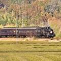 写真: 日暮れの大井川鐵道SL C108抜里の茶畑を。。(1) 20180120