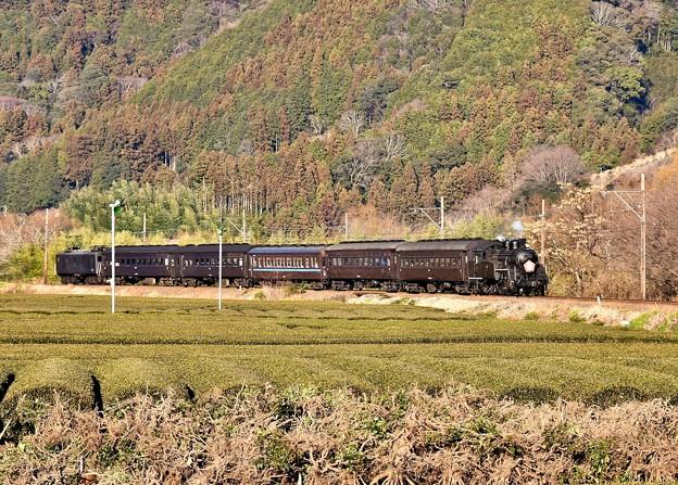 写真: 日暮れの大井川鐵道SL C108抜里の茶畑を。。(2) 20180120