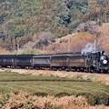 写真: 日暮れの大井川鐵道SL C108抜里の茶畑を。。(3) 20180120