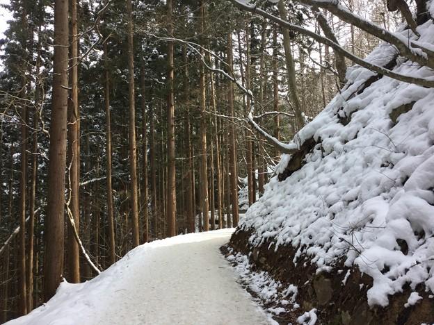 長野 野猿公苑へ行く林道。。約30分の道 20180203