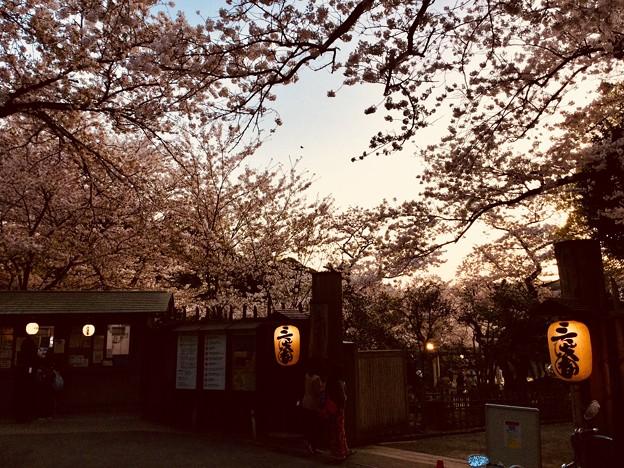 撮って出し。。まだまだ散ってない三渓園の桜 3月30日