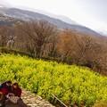 Photos: 菜の花バックで。。吾妻山公園の風景 20180204