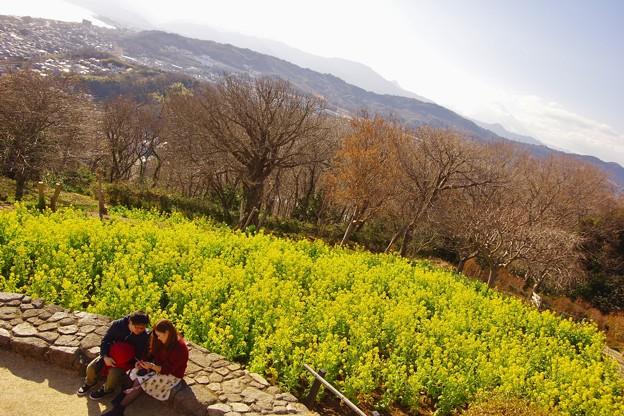 微笑ましい二人の風景。。吾妻山公園菜の花 20180204
