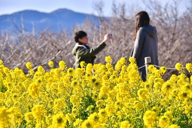 菜の花の中。。仲良い二人の風景 吾妻山公園 20180204
