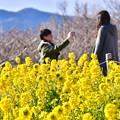 Photos: 菜の花の中。。仲良い二人の風景 吾妻山公園 20180204