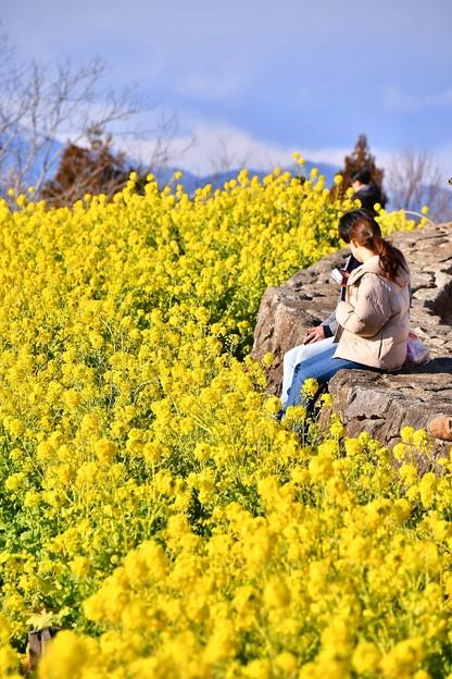 菜の花でお花見。。お弁当広げて 吾妻山公園 20180204
