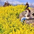 Photos: 菜の花でお花見。。お弁当広げて 吾妻山公園 20180204