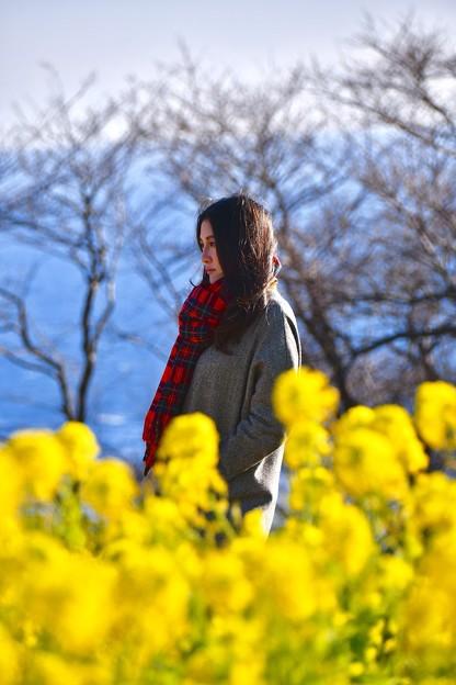 美女を彩る菜の花。。吾妻山公園 20180204