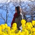 写真: 美女を彩る菜の花。。吾妻山公園 20180204