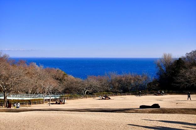 菜の花畑の反対側の風景。。青い相模湾の海と青空 20180204