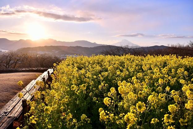 日が暮れていく吾妻山公園。。富士山も見えて 20180204