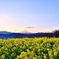 Photos: 日暮れからまた空が青く。。黄色い菜の花との色彩。。吾妻山公園 20180204