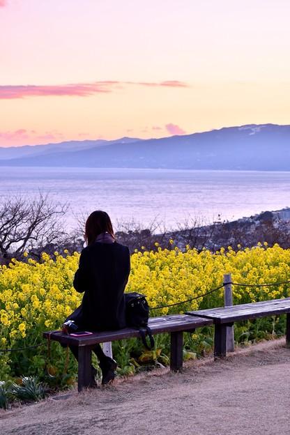 女性一人。。菜の花と相模湾を眺めて。。吾妻山公園 20180204