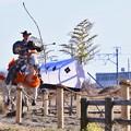 写真: サラブレッドの白い馬。。走りが違う 流鏑馬 20180211