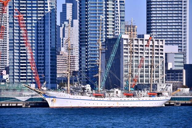 都会の中に帆船日本丸。。晴海埠頭停泊 20180212