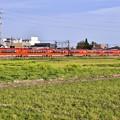 写真: 撮って出し。。開成町で西陽浴びてオレンジ色新型ロマンスカーGSE 菜の花 4月7日