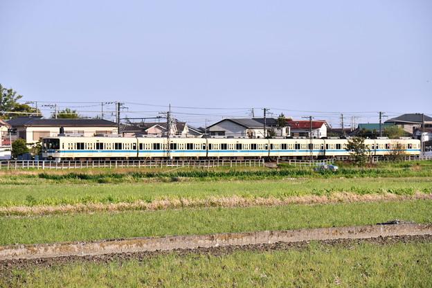 撮って出し。。小田急オリジナルカラー白と青ライン8000系と菜の花 4月7日