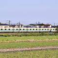 写真: 撮って出し。。小田急オリジナルカラー白と青ライン8000系と菜の花 4月7日