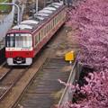 写真: 三浦の河津桜と京急線とのコラボ。。(1) 20180225