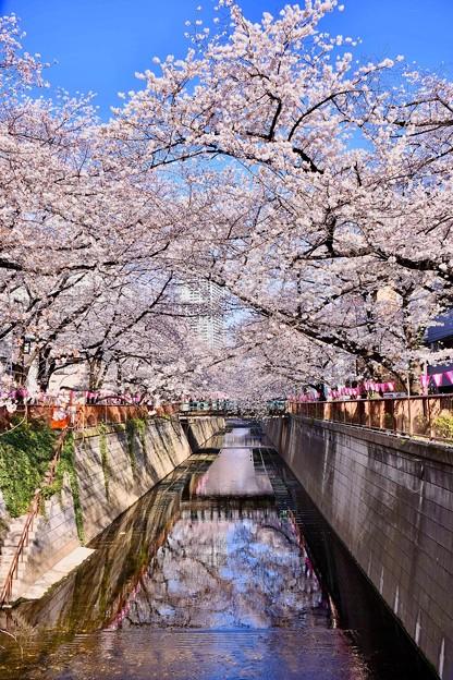 今年の目黒川の桜は綺麗だった(^^) 20180325
