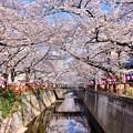 Photos: 今年の目黒川の桜は綺麗だった(^^) 20180325