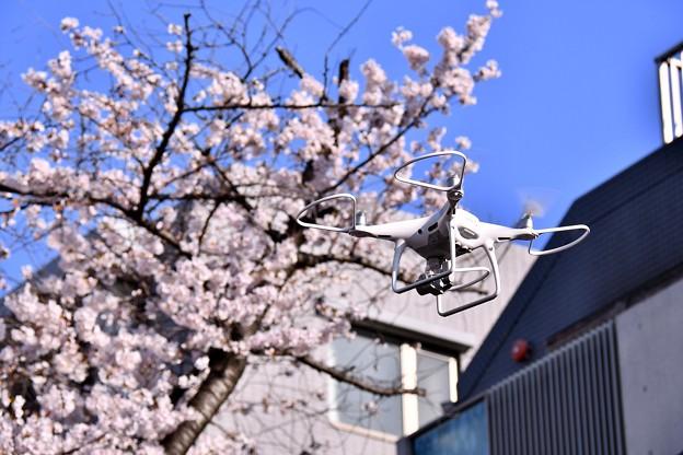 目黒川の桜をドローンで撮って。。(^^) 20180325