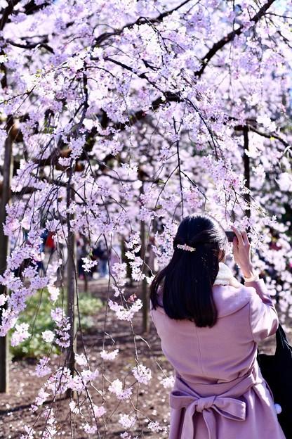 ピンクの枝垂れ桜とピンクな女子。。六義園 20180325