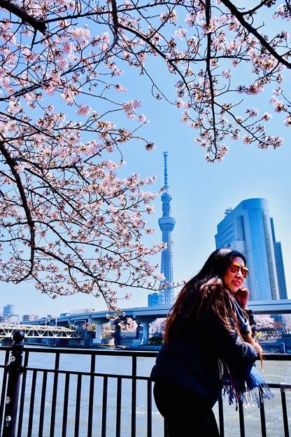 今や外国人観光で多い隅田川。。東京スカイツリーと桜 20180325
