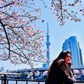 Photos: 今や外国人観光で多い隅田川。。東京スカイツリーと桜 20180325
