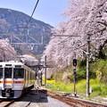 写真: 御殿場線山北駅ホームから満開桜。。20180331