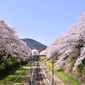 写真: 御殿場線山北駅の歩道橋から見える満開桜 20180331