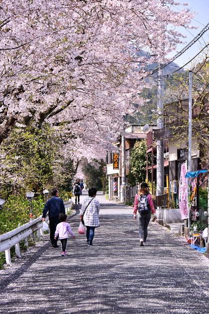 写真: 山北町の桜並木を親子で散歩 20180331