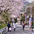 Photos: 山北町の桜並木を親子で散歩 20180331