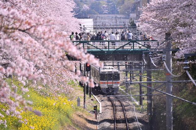御殿場線普通列車来れば舞う桜の花びら 20180331