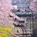 写真: 御殿場線普通列車来れば舞う桜の花びら 20180331