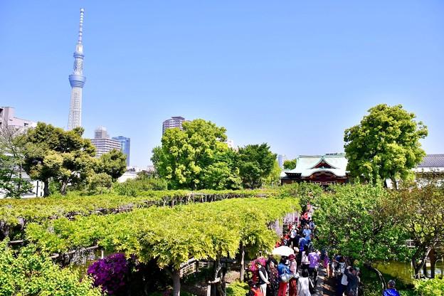 亀戸天神からも見える東京スカイツリー 20180422